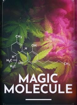 Buy Magic Molecule from Microsoft.com