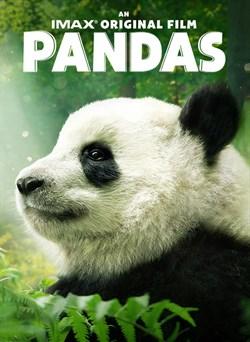 Buy Pandas from Microsoft.com