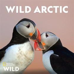 Buy Wild Arctic from Microsoft.com