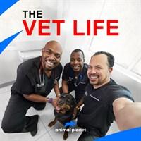 The Vet Life