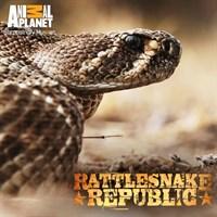 Rattlesnake Republic